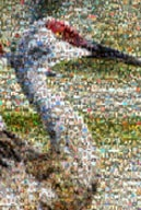 Blue Heron Mosaic